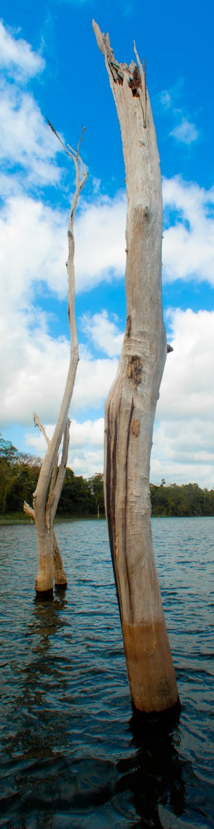 madera sumergida